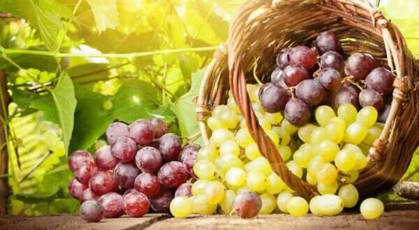 5 grapes recipes for summers
